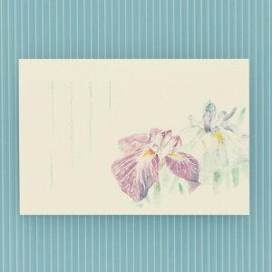 季節の絵はがき[端午・初夏]花しょうぶ