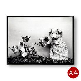 A4ポスター 犬のモノクロポスターNo.3 花の水やり モノトーン インテリア 動物 写真 アートポスター 壁飾り ビンテージ ポイント消化 送料無料