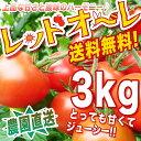 【送料無料】 旬のお味【農家直送】リコピン・ミネラルたっぷりの樹上完熟フルーツミディー、レッドオーレ!たっぷり3kg・ トマト・ミ…