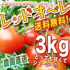 送料無料【こだわり栽培】甘味と酸味の絶妙なバランス!おやつにもどうぞ!レッドオーレたっぷり3キロ