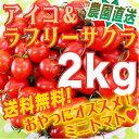 送料無料【こだわり栽培】栄養満点!おやつにもどうぞ!アイコ・ラブリーサクラ・欲張りミックス2キロ