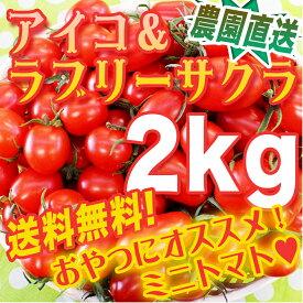 生産農家直送【こだわり栽培】栄養満点!おやつにもどうぞ!アイコ・ラブリーサクラ・欲張りミックス2キロ