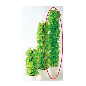 【まとめ買い10個セット品】 ライムポトスヘゴ(人工樹木) H180cm 触媒付き 【メーカー直送/代金引換決済不可】店舗什器 ディスプレー マネキン 装飾品 販促用品 ハンガー ラッピング