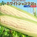 【斉藤農園】とうもろこし ホワイトショコラ 20本 Lサイズ 生で食べれる! 送料無料 北海道 ニセコ産 朝採り 低農薬栽…