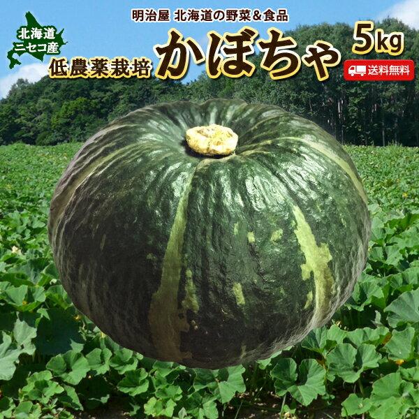 かぼちゃ 5kg 送料無料 北海道 ニセコ産 秀品 低農薬栽培 北海道産 カボチャ ハロウィン
