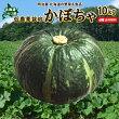 北海道ニセコ産かぼちゃ10kg