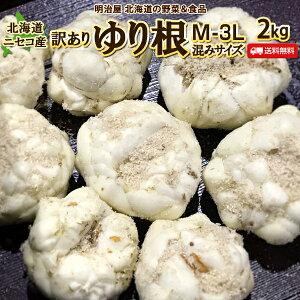 訳あり ゆり根 送料無料 2kg 北海道産 ニセコ産 高級食材 百合根 ユリ根 混みサイズ わけあり ワケアリ