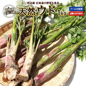 うど 送料無料 1kg 天然 生 北海道 ニセコ産 春の山菜 冷蔵便 うど 独活 ウド 山菜