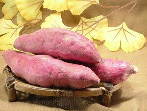 サツマイモ 福井県産とみつ金時(さつまいも高級ブランド) さつま芋 薩摩芋1kg入 昔ながらの ほのかな甘味とふっくら食感が特徴ポイント10倍 10倍ポイント 父の日 ギフト