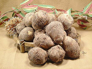 越前大野市特産 上庄の里芋(さといも) 『1kg』 [訳あり 格安]キズあり品小粒品 里いも(サトイモ)里イモ 訳アリ・わけあり・ワケあり品ですお届け期間 10月末頃〜11月下旬迄楽天