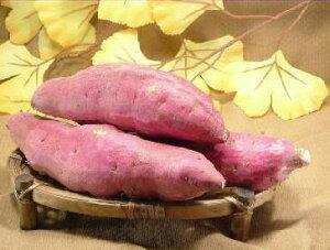 サツマイモ 訳あり 送料無料 福井県産 とみつ金時10kg入昔ながらの ほのかな甘味とふっくら食感が特徴訳アリ品 さつまいも さつま芋 薩摩芋規格外 傷アリ格安 形サイズ ご指定不可 わけあり