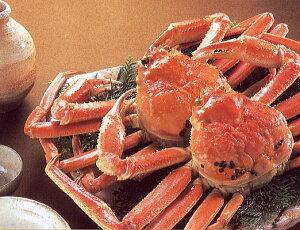 送料無料 セイコガニ Lサイズ せいこ 蟹5杯ずわいがにの 雌ガニ メスガニ が せいこ蟹呼称はセコガニ 香箱蟹 こっぺがに せこがに 親がにせこ蟹 こうばこがに めがに 香箱ガニ 親カニ 外子