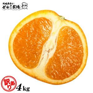 【訳あり】 清見 オレンジ 訳あり 清見オレンジ 4.0kg 送料無 送料無料 果物 くだもの フルーツ 訳あり 送料無料 和歌山 有田 産地直送 オレンジ 4kg 自宅用 箱買い 家庭用 4キロ