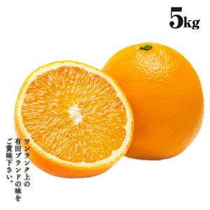 清見オレンジ 5kg 旬 果汁 清見オレンジ 有田 農家直送 種なし ジューシー 産地直送 樹上 完熟きよみ 有田 ブランド 国産オレンジ   果物 くだもの フルーツ ギフト 贈答用 5キロ