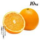 清見オレンジ 10kg 旬 果汁 清見オレンジ 有田 農家直送 種なし ジューシー 産地直送 樹上 完熟きよみ 有田 ブランド…