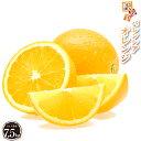 バレンシアオレンジ 7.5kg【訳あり】 産地直送 和歌山県 国内 国産 送料無料 オレンジ 完熟 果物 フルーツ 美味しい …