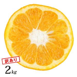 【訳あり】 伊予柑 いよかん 訳あり 2kg 和歌山県 有田産 産地直送 農園 日本 国産 フルーツ 美味しい おいしい 果物 くだもの ジューシー 酸味 箱買い 自宅用 訳アリ いよかん 2キロ