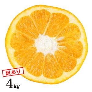 【訳あり】 伊予柑 いよかん 訳あり 4kg 和歌山県 有田産 産地直送 農園 日本 国産 フルーツ 美味しい おいしい フルーツ 果物 くだもの ジューシー 箱買い 自宅用 4キロ 訳アリ いよかん 送料