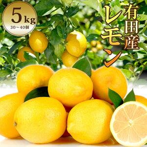 有田産レモン 国産 減農薬 レモン 5.0kg 送料無料 和歌山県 産地直送 檸檬 lemon 有機 れもん 5キロ 酸っぱい ビタミンB ビタミンC クエン酸 果物 生 食品