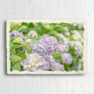 和紙 ポストカード 花 初夏 「薄ピンク色のアジサイ」 15x10cm