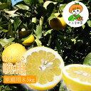 晩柑【久玉果樹園のあまくさ晩柑】8.5kg 家庭用 熊本 熊本県産 天草晩柑 河内晩柑 ジューシーフルーツ 柑橘 甘い お中…