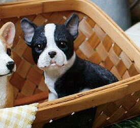 フレンチブルドックのエース チアフルフレンズ フレンチブルドック 犬 いぬ イヌ dog ドッグ ドック 置物 小物 オブジェ【10p07jan17】