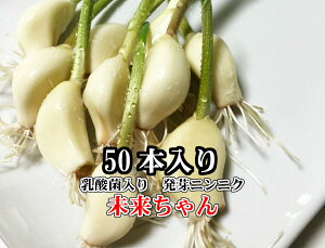 鹿児島県産 発芽にんにく 未来ちゃん 50本(乳酸菌入り 高品質 発芽 にんにく芽も根もまるごと食べられる 無農薬の水耕栽培でにおいが残りにくい スプラウトガーリック おつまみ 無