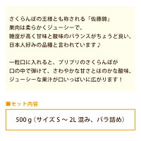 さくらんぼ(佐藤錦)約500g(S〜2L混合・ばら詰め)