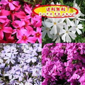 【送料無料!】【とってもお得!】芝桜(シバザクラ)貴重な紫花10pが入った選べる40pミックスセットオーキントンブルーアイ(紫)10p+(他10p×3種類)