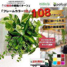 壁掛け 土に代わる パフカル 観葉植物 ミドリエ デザイン FRAME(スクエア) 9色