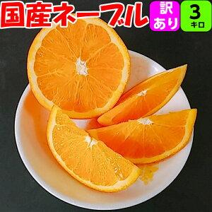 【訳あり】 ネーブル オレンジ 3kg 送料無料国産 の 紀南 の ネーブルオレンジ は一味違います紀南 紀州 和歌山 木熟 もぎたて 完熟 濃厚 糖度 甘い みかん フルーツ 贈答 ギフト