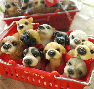 「わんちゃんマスコット♪ DOG ミニミニ10犬種set」【送料無料】【楽ギフ_包装】【楽ギフ_メッセ入力】