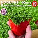 【レビュー特典あり】 クラピア K3 9cmポット苗 40鉢セット 完全植栽マニュアル付き 新品種 ピンク色 桃色 雑草対策 …