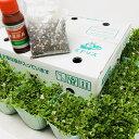 クラピア K7 新品種 10株 すくすくセット 苗10ポット 肥料2種(有機一発肥料、メネデール) 植栽マニュアル付き 【レ…