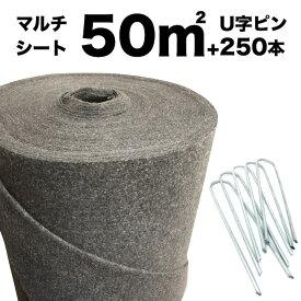 50平米分セット クラピア専用マルチシート 1m×50m(50m2)+Uピン(250本) クラピア 植栽用 吸水性 透水性 アップ