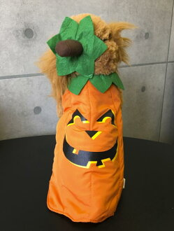 杰克-O-灯笼狗万圣节服装