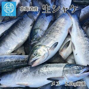 メス 生しゃけ 約3.5kg前後 1尾 鮭 さけ しゃけ シャケ 天然 お取り寄せ 秋の味覚