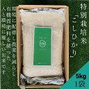 〈無洗米〉【特別栽培米】コシヒカリ5kg×1袋★おうち時間応援企画★