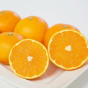 清見 清見オレンジ 清見タンゴール 訳あり 4kg みかん 愛媛 人気 オレンジ 直送 旬 ご家庭用