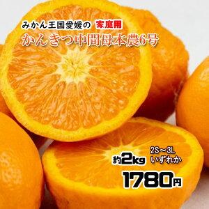 かんきつ中間母本農6号  希少品種 柑橘 箱買い みかん 2S〜3L 約2kg 送料無料