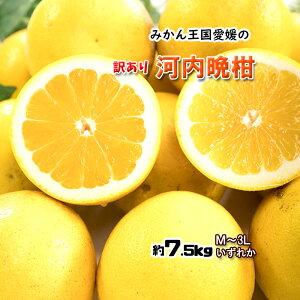 河内晩柑 愛媛県産 和製グレープフルーツ ジューシーオレンジ M-3L 7.5kg 送料無料