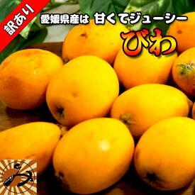 びわ 訳あり ビワ 約 1400g 愛媛県産 送料無料 枇杷 冷蔵