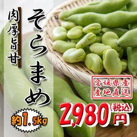 そらまめ 蚕豆 ソラマメ そら豆 肉厚 ホクホク 1.5kg 送料無料