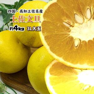 文旦 ぶんたん 箱買い 家庭用 高知県産 土佐文旦 大人の柑橘 3L以上 大玉 4kg 送料無料
