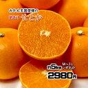 せとか 訳あり 箱買い 柑橘の大トロ 愛媛県産 約 5kg M〜3L いずれか