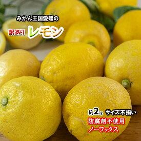 レモン 訳あり 愛媛県産 防腐剤不使用 ノーワックス 新物 不揃い 約 2kg