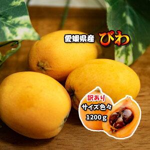 びわ 訳あり ビワ 約 1200g 愛媛県産 送料無料 枇杷 冷蔵