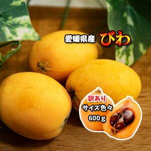 びわ 訳あり ビワ 約 600g 愛媛県産 送料無料 枇杷 冷蔵