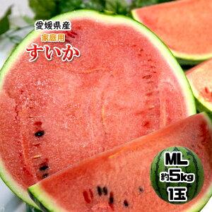西瓜 すいか 愛媛県産 シャリっと甘〜い スイカ 家庭用 送料無料 約5kg MLサイズ 1玉