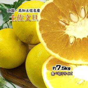 文旦 ぶんたん 箱買い 家庭用 高知県産 土佐文旦 大人の柑橘 食べきりサイズ 7.5kg 送料無料